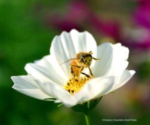 bee.dreamstimefree_97143