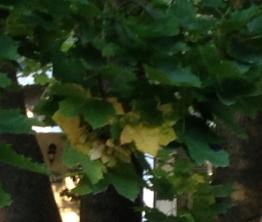 autumn-square-ep