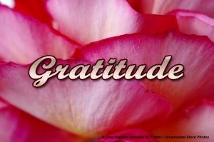 gratitude-dreamstimefree_138084